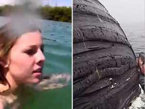 Baleine Commence à Faire Du Ram Diver, Elle Regarde En Bas Et Réalise Pourquoi