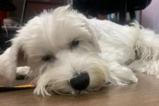 How Dogs Cry For Help: 3 Warning Signs Your Dog Is Crying For Help